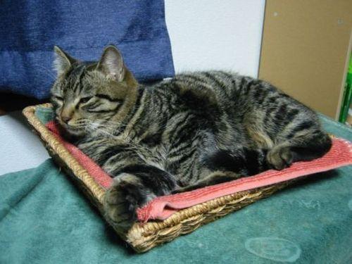 ちゃおくんも、猫ベッドはお気に入り?
