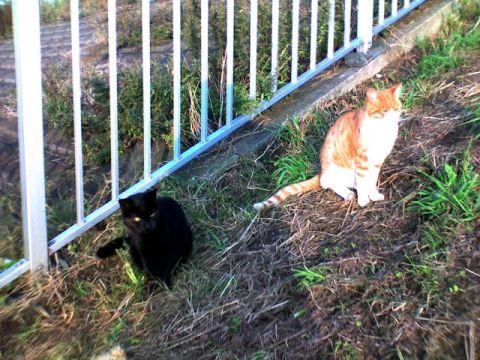 六郷水門の猫達(クロと茶トラ)