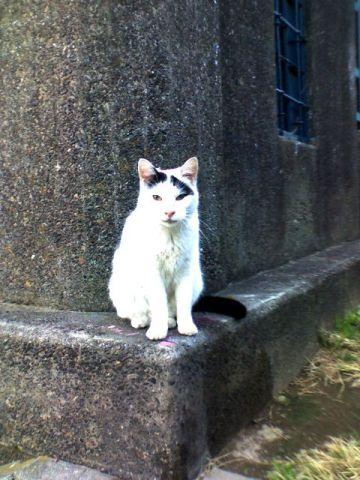 六郷水門の猫達(ウッシーくん)