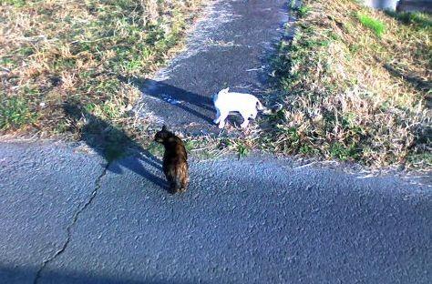 飼い猫ちゃんとサビ子さん