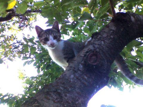 桜の木の上から「こんにちは」してくれたね...