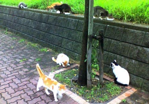 大盛況の猫食堂