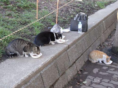 移動猫食堂(その二)