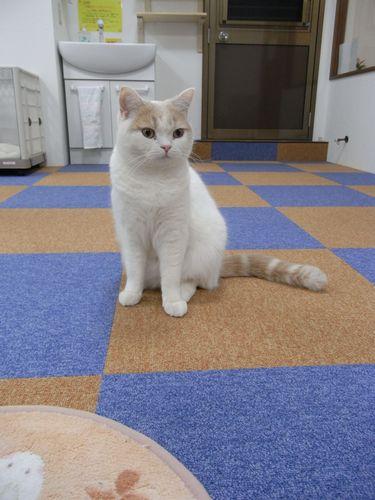 ムックくん - 猫のまほう・蒲田東口店