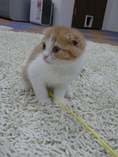 リオくん - 猫のまほう・蒲田東口店