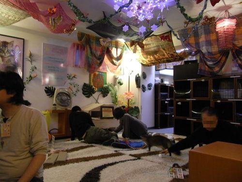 猫カフェ『ぷぅにゃん』(3)-店内の様子