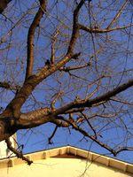 冬の桜・冬の空