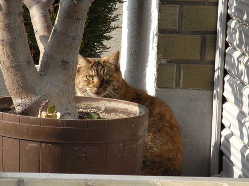 猫@新宿・高田馬場