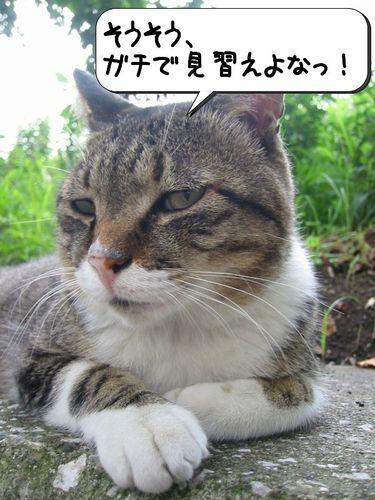 ガチで見習えよなっ!(by きじよし)