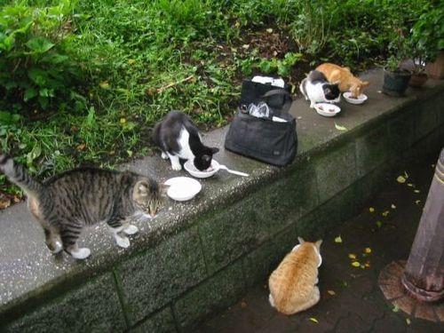 雨上がりは、ネコ食堂大盛況
