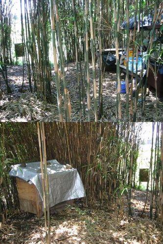 河原猫の竹薮