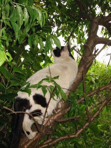 もーも、メタボでも木登りはできる!