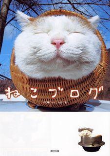 ねこブログ - 肉球、ばんざ~~~い!