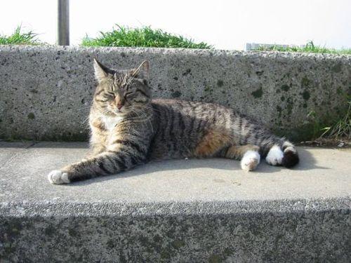 はるみちゃん、階段で日向ぼっこ