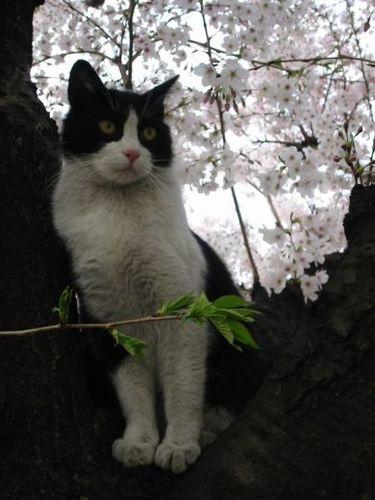 プッチくん、桜の木に!