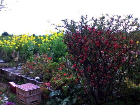 土手に咲く春の花々
