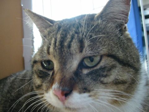 オラもかま猫(´ ё`)